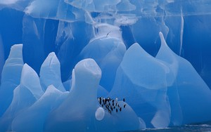 Ikona pakietu Chinstrap Penguins group riding iceberg