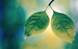 أيقونة Leafy