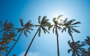 Ikona pakietu Palms In Sky