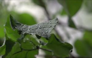 Ikona pro Rain on a leaf
