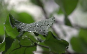 Icona per Rain on a leaf