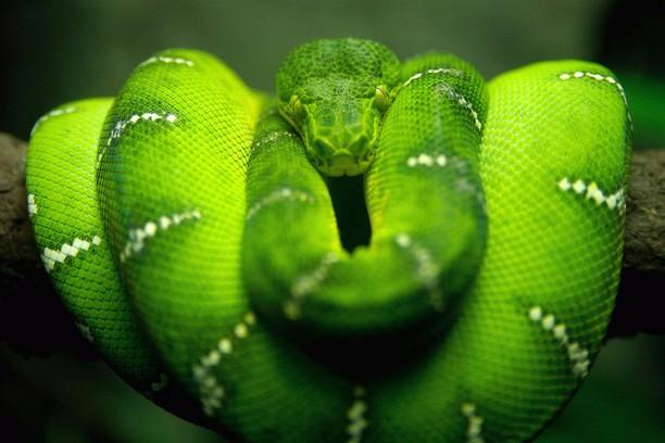 Rüyada Büyük Yeşil Yılan Görmek Korkmak