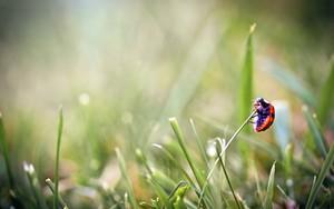 Ikona balíka ladybug on the grass