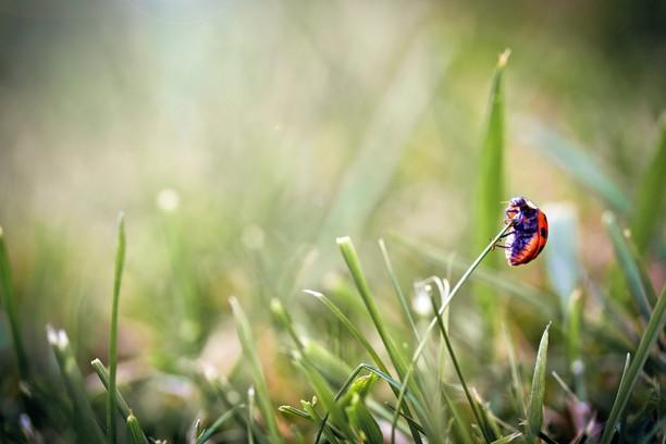 Снимок экрана для ladybug on the grass