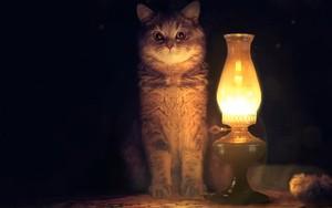 Symbol für Cat