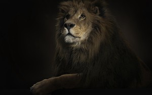 Pictogram voor Lion King 1