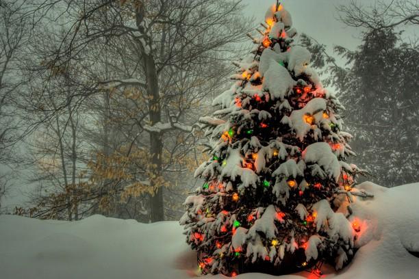 Screenshot for Winter forest