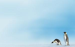 Symbol für Emperor Penguins