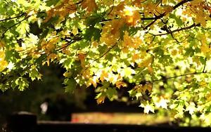 Ikona pro Fall Branch