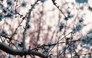 Whispering Trees paketi için simge