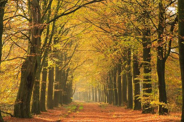 Снимок экрана для Autumn curve