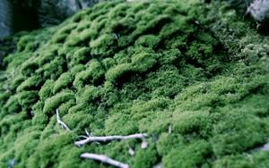 Symbol für moss