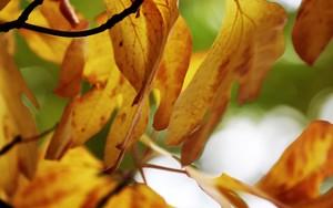 Symbol für Fall Leaves
