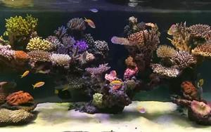 aquarium के लिए आइकन