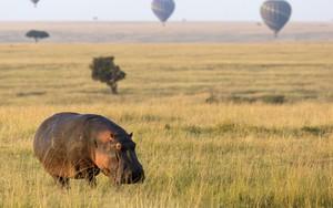 Значок для Hippopotamus