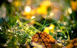 Icona per Grass blur