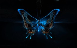 Ikoan foar Butterfly