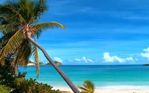 Icono de cCeda Paradise Island