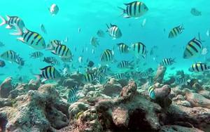 Icono de cCoral Reef Aquarium