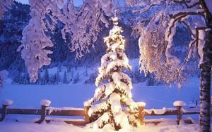 Symbol für Weihnachtsbaum