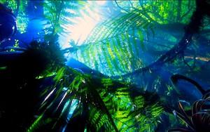 Ikona pro Avatar jungle