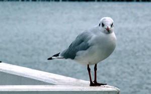 seagull的图标