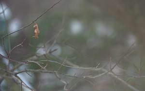 Значок для Last Leaf