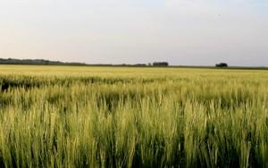 Kohteen Green Field kuvake