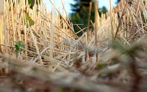 Kohteen Hay Field kuvake
