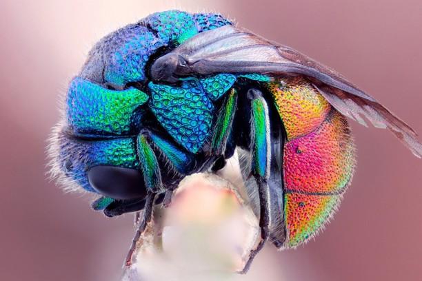 Снимка за Rainbow Fly