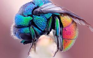 Значок для Rainbow Fly