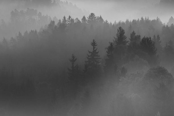 Captura de pantalla para Night Forest