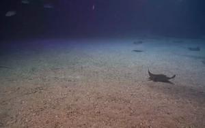 Ikoan foar underwater