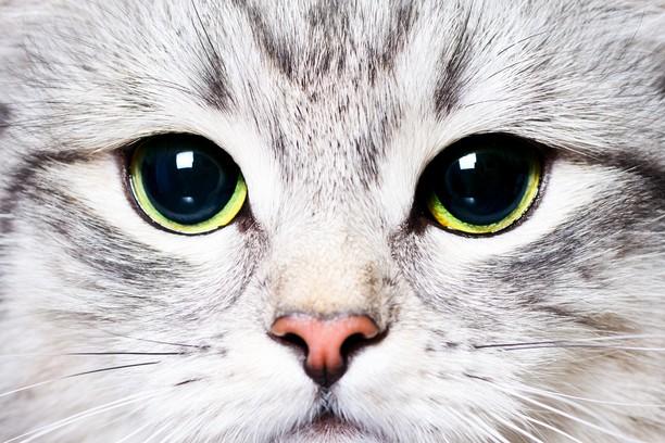 Снимок экрана для Cat