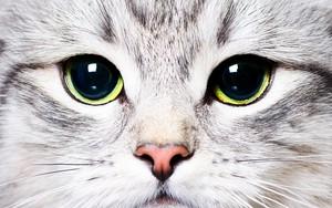 Ikona pakietu Cat