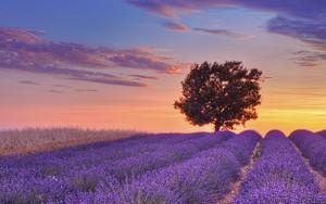 Ikona balíka Lavender Field