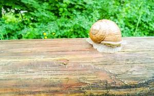 Ikona za Snail
