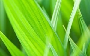 Icône pour Green Leaf