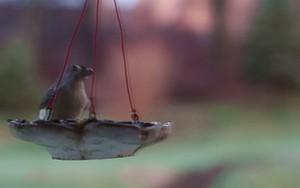 Ikona pro Birds and feeder