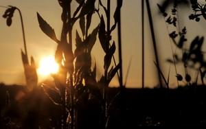 Ikona pro Sunset