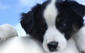Значок для A Very Cute Dog