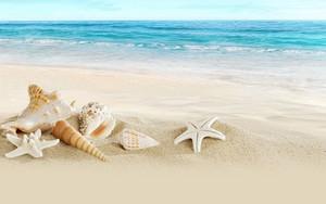 Icon for Ocean beach