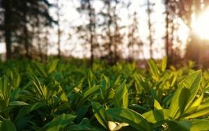 Εικονίδιο Polish leafs