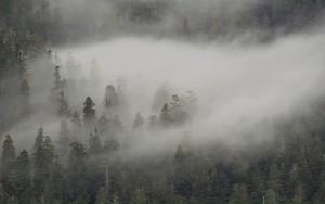 Ikona pakietu Misty forest