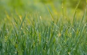Ikona za Summer Green Grass