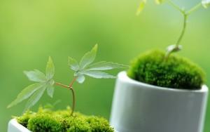 Icon for Ornamental Plants