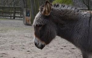 Donkey的图标
