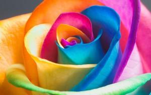 Icône pour Color Flower