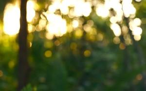 Ikona pro Blurred Forest