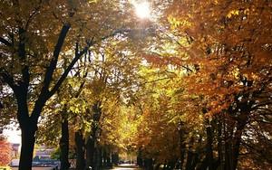 Ikona pakietu Autumn old street